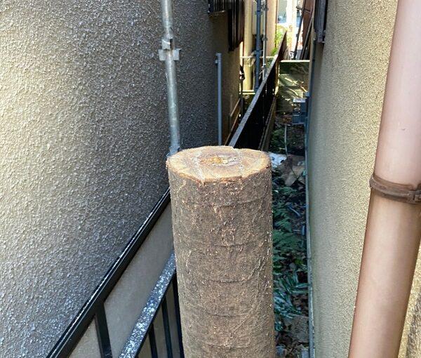 千葉県松戸市 S様邸 コーキング工事 樹木剪定 (3)