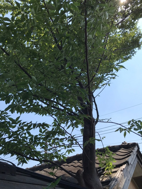 千葉県松戸市 S様邸 コーキング工事 樹木剪定 無料現場調査・見積もり 樹木による瓦の落下 (2)